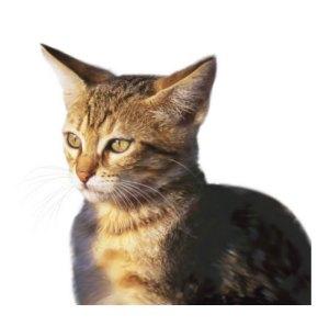 cat_m